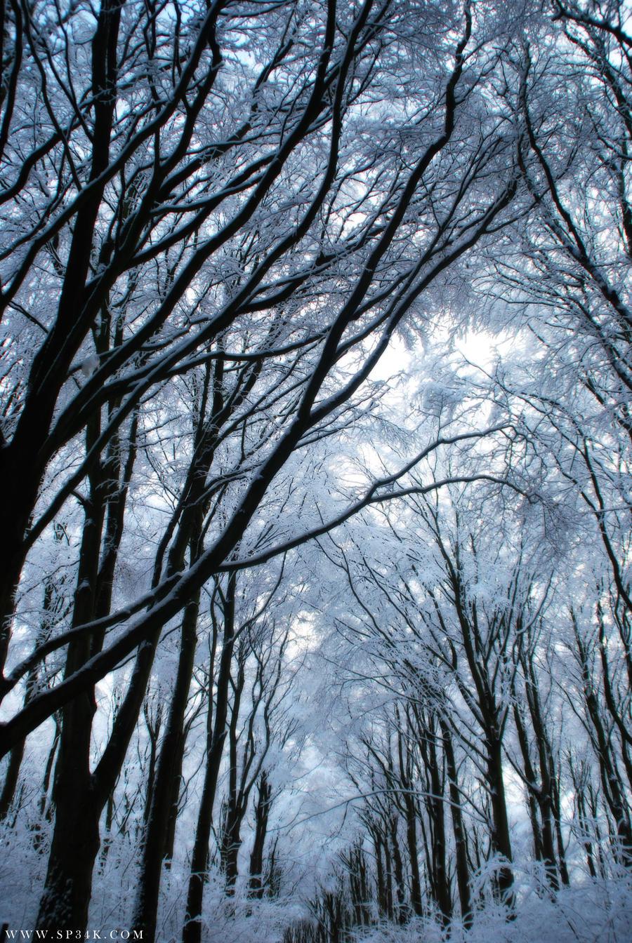 Frozen Beauty by 5p34k