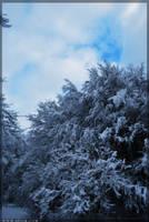 Soft Snow by 5p34k