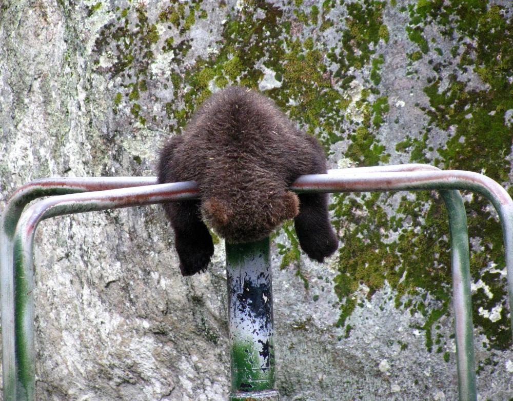 Merry-go-round Bear by Sotkettu
