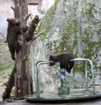 Bear Cubs Have Fun