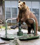 Big Sister Bear Has Fun