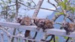 Monkeys in Brazil!