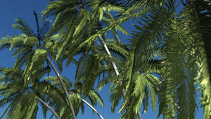 Palms of The Pacific