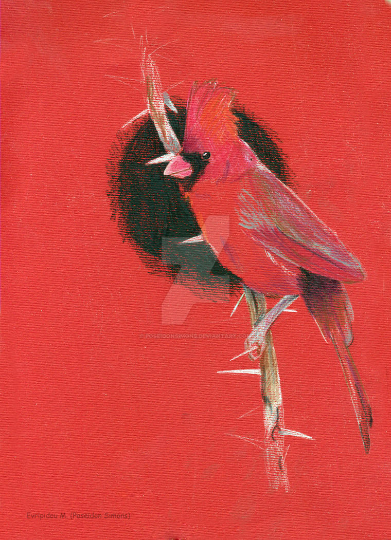 common cardinal by poseidonsimons