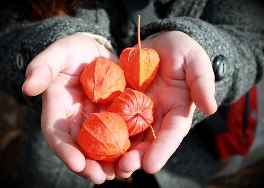 Golden Autumn by Vogel12