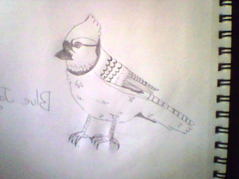 I DREW A BIRD by Dragonqueen316AJ