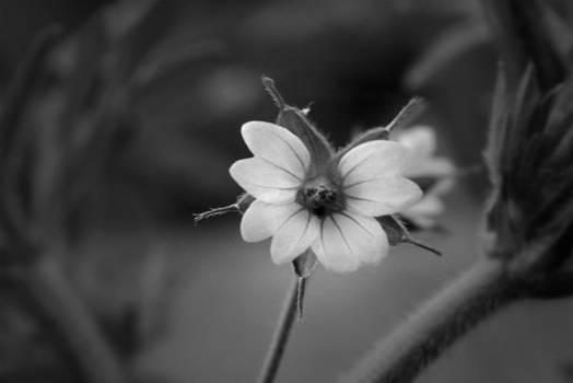 Mr Flower