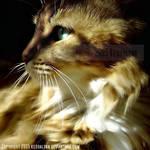 Sunlight Kitty