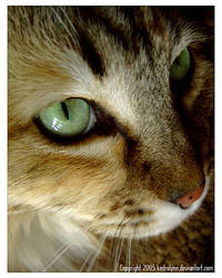 Those Green Eyes by kedralynn