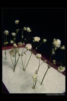 Little Garden II by kedralynn