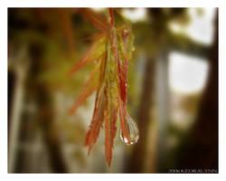During the Rainfall by kedralynn