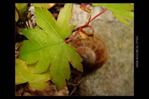 Snail Hideaway by kedralynn