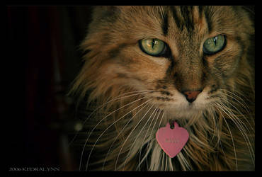 Pretty Kitty by kedralynn