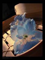 Pretty Flower by kedralynn