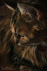 Beautiful Feline by kedralynn