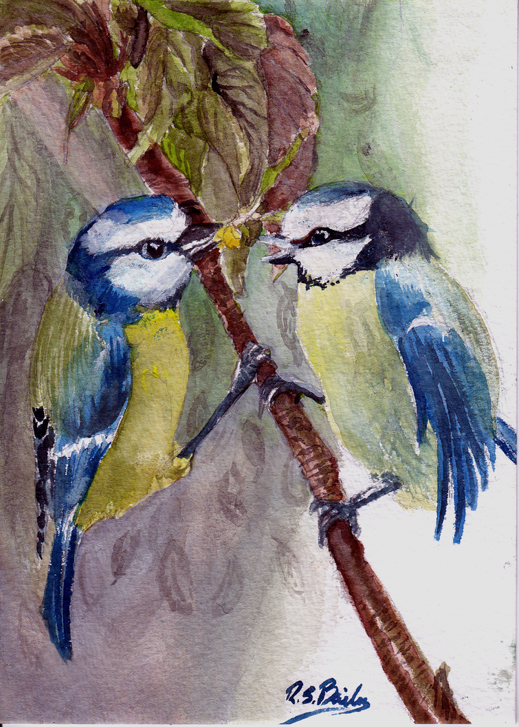 Bluetit - Watercolour by Mellifluous-whispers