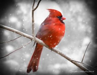 Cardinal by Jcdow3Arts