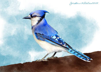 Blue Jay by Jcdow3Arts