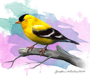Goldfinch by Jcdow3Arts