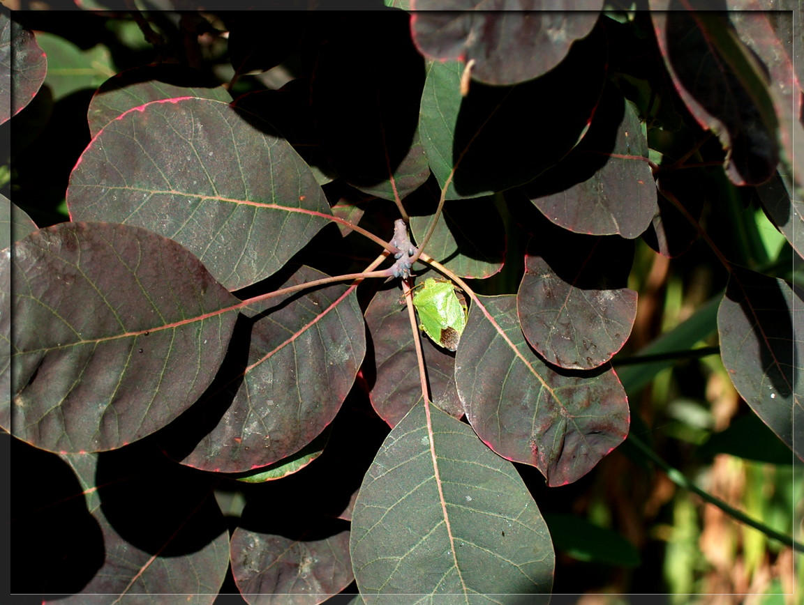 Green Stink Bug by biggyp