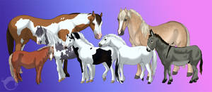 The Pony Crew from my stable