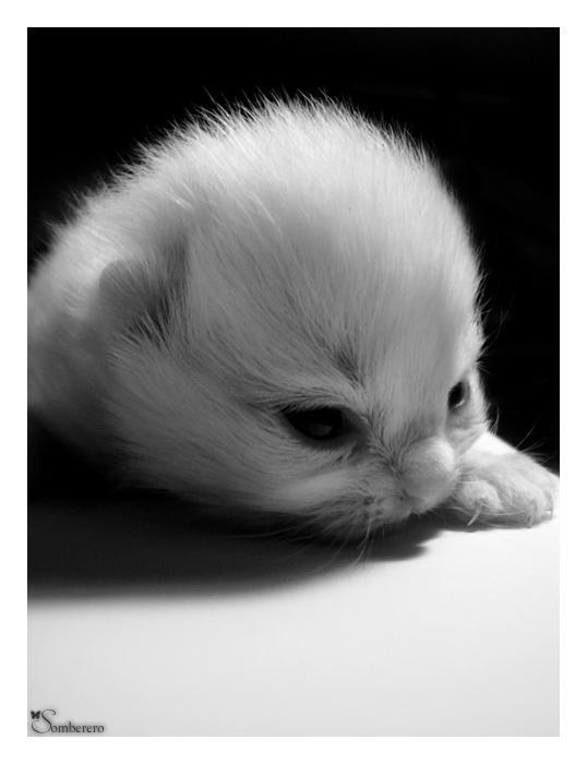 New Kitten by Somberero
