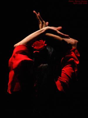 Flamenco by aniram67
