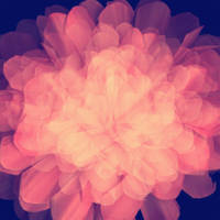 Texture flower by palnk