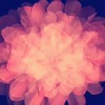 Texture flower