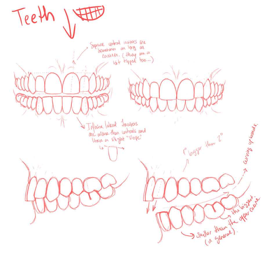 Teeth by palnk