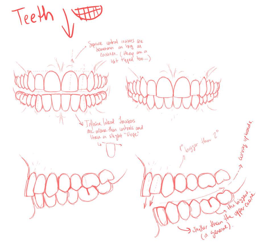 Teeth by palnk