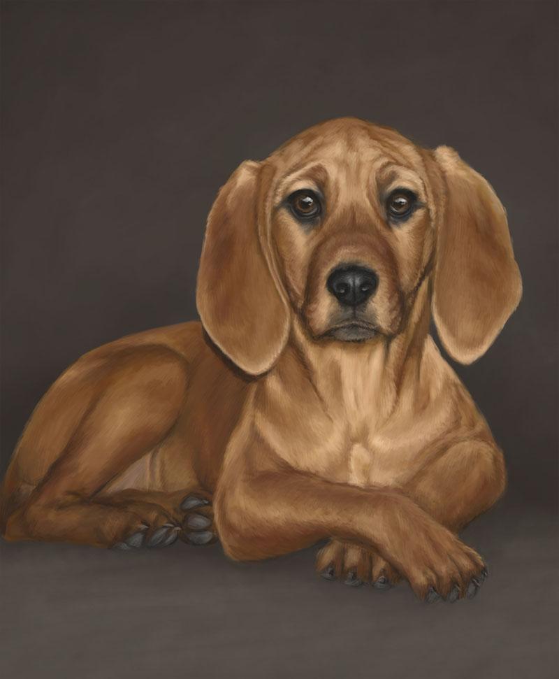 Pet Portrait - Toby by bugsandbears
