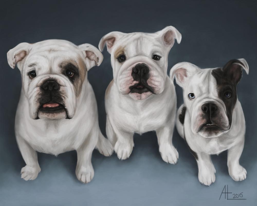 Three Bulldogs by bugsandbears