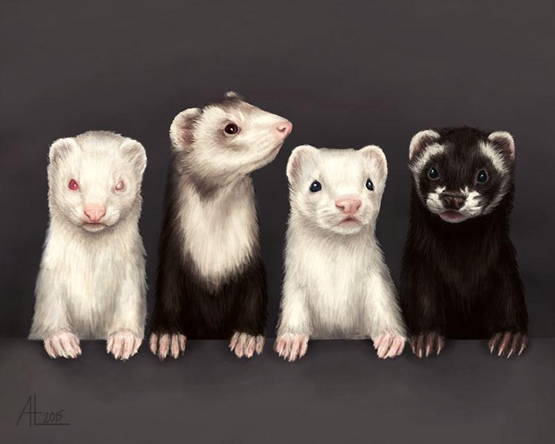 My Ferrets by bugsandbears