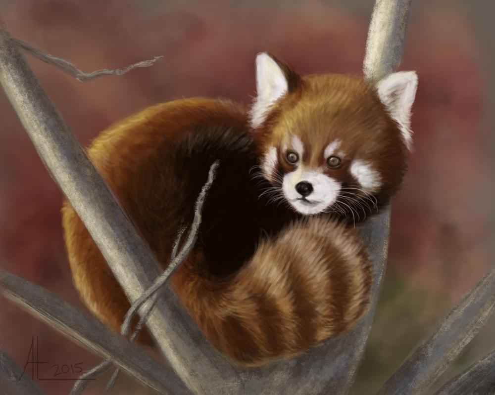 Red Panda by bugsandbears