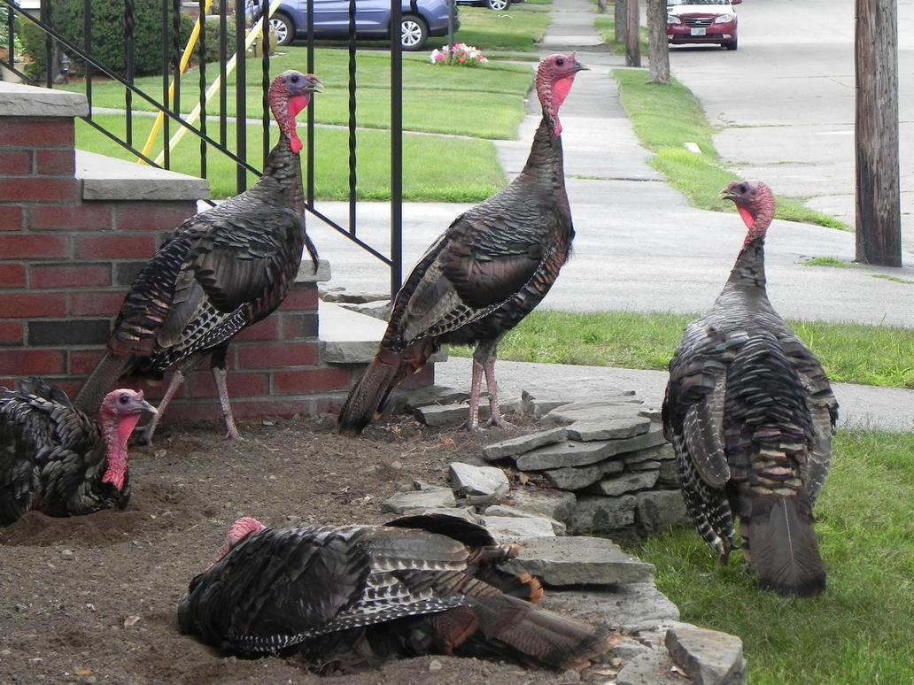 Flock of Turkeys by Yggdrassal