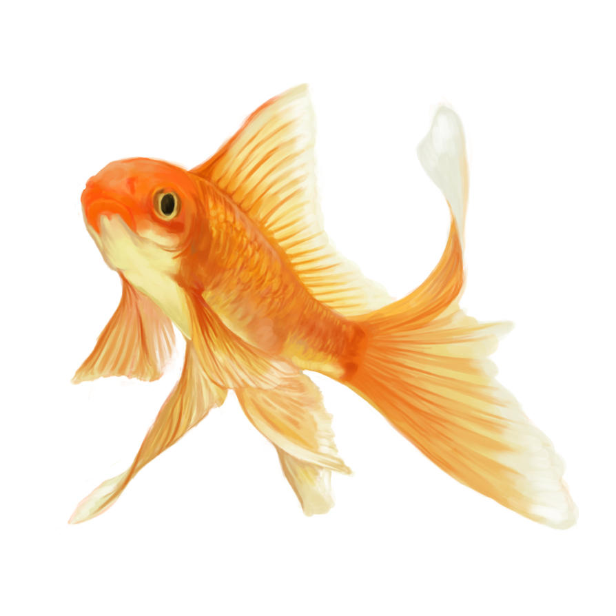 Cute goldfish drawing for Fish for gold