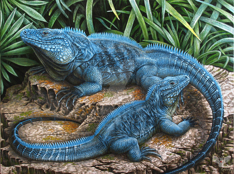The Grand Cayman Blue Iguana By ART Fromthe HEART