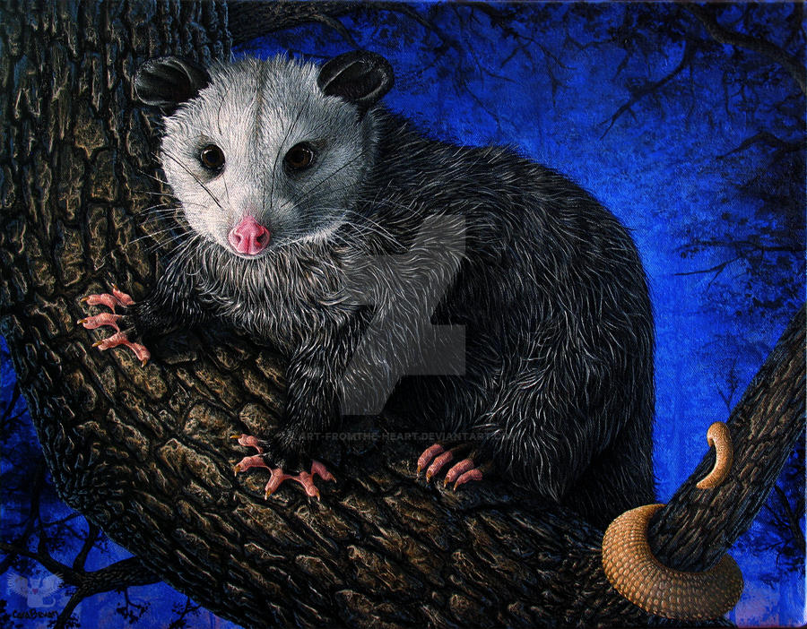 Pluto opossum by ART-fromthe-HEART