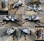 Sculpted Gourd Beetle #2 - Goliath Beetle