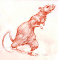 Ratita Little Rat