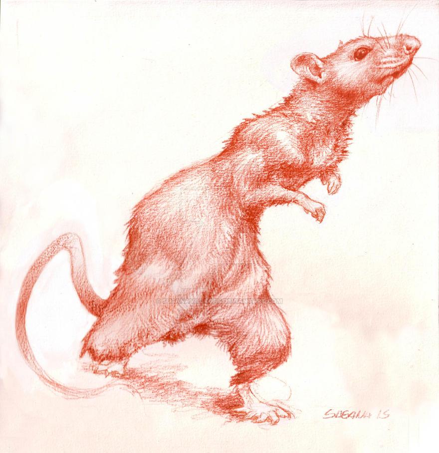 Ratita Little Rat by susanavillegas