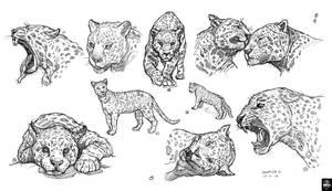 Proyecto Mil Jaguares Parte 01 by susanavillegas