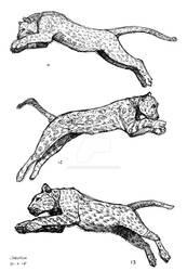 Proyecto Mil Jaguares Parte 03