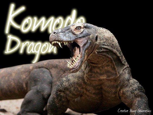 Komodo dragon by Gank-soel ...