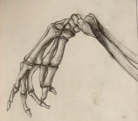 Skeleton Hand study by Deiphorm on DeviantArt