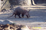 Aardvark -1-