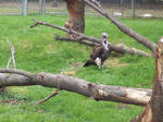 Vulture -2-