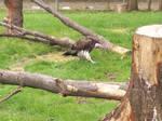 Vulture -4-