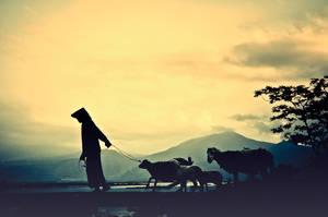 The Shepherd by pelacurseni